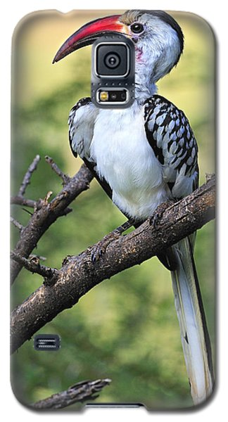 Red-billed Hornbill Galaxy S5 Case by Tony Beck