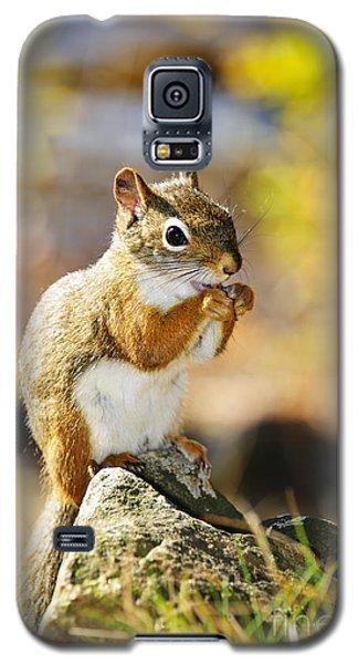 Red Squirrel Galaxy S5 Case by Elena Elisseeva