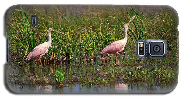 Roseate Spoonbills Galaxy S5 Case by Louise Heusinkveld