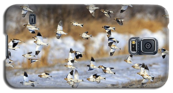 Snow Buntings Galaxy S5 Case by Tony Beck