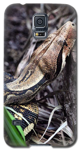 The Boa Galaxy S5 Case by JC Findley