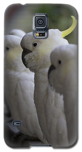 The Line-up Galaxy S5 Case by Douglas Barnard