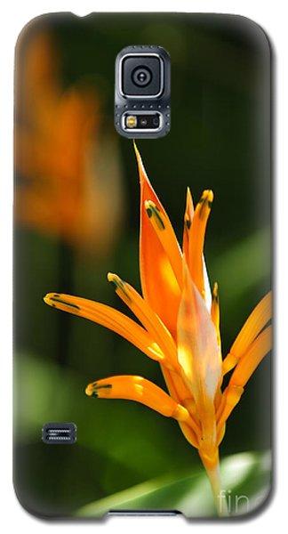 Tropical Orange Heliconia Flower Galaxy S5 Case by Elena Elisseeva