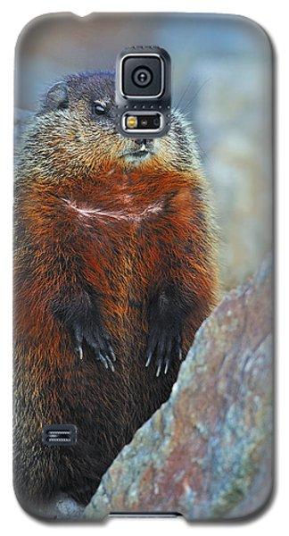 Woodchuck Galaxy S5 Case by Tony Beck