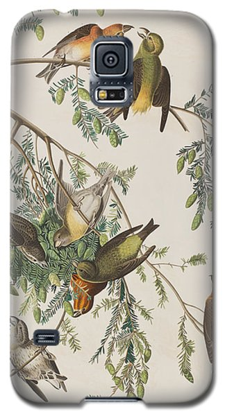 American Crossbill Galaxy S5 Case by John James Audubon