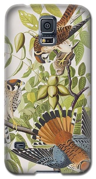American Sparrow Hawk Galaxy S5 Case by John James Audubon
