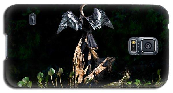 Anhinga Anhinga Anhinga, Pantanal Galaxy S5 Case by Panoramic Images