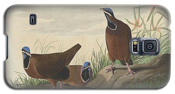 Blue-headed Pigeon Galaxy S5 Case by John James Audubon