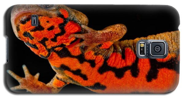 Chuxiong Fire Belly Newt Galaxy S5 Case by Dant� Fenolio