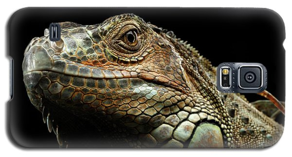Closeup Green Iguana Isolated On Black Background Galaxy S5 Case by Sergey Taran