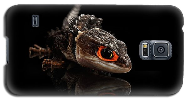 Closeup Red-eyed Crocodile Skink, Tribolonotus Gracilis, Isolated On Black Background Galaxy S5 Case by Sergey Taran