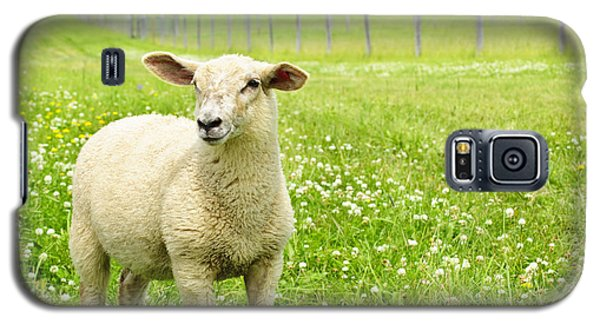 Cute Young Sheep Galaxy S5 Case by Elena Elisseeva