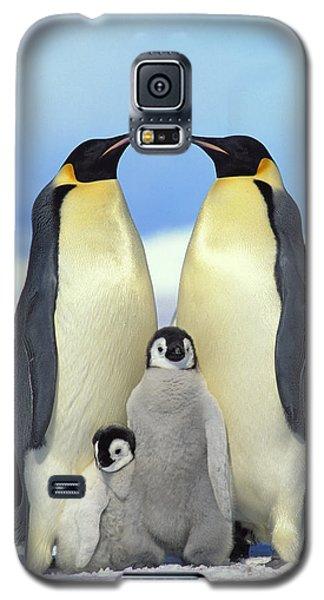 Emperor Penguin Aptenodytes Forsteri Galaxy S5 Case by Konrad Wothe
