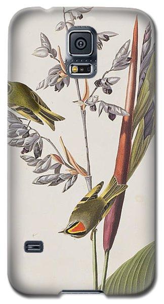 Golden-crested Wren Galaxy S5 Case by John James Audubon