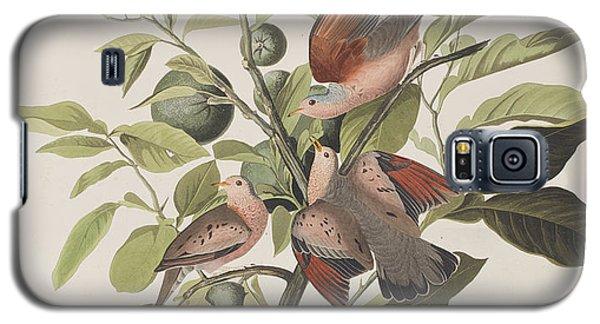 Ground Dove Galaxy S5 Case by John James Audubon