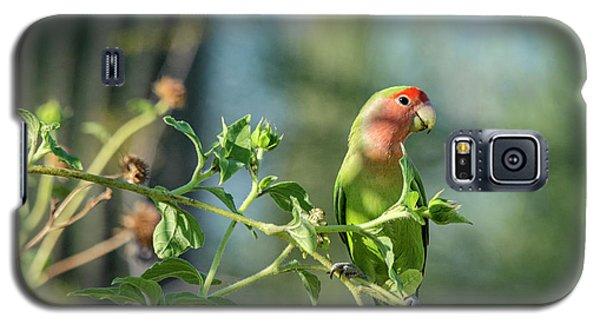 Lovely Little Lovebird  Galaxy S5 Case by Saija Lehtonen