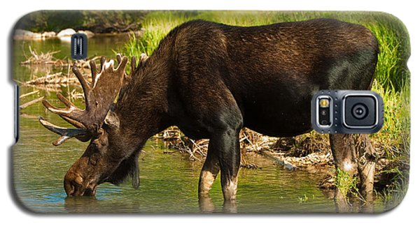 Moose Galaxy S5 Case by Sebastian Musial