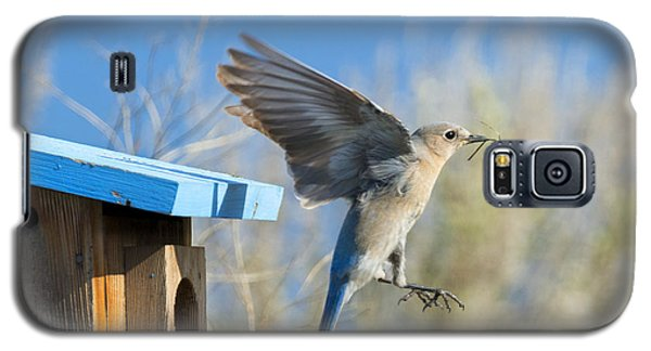 Nest Builder Galaxy S5 Case by Mike Dawson