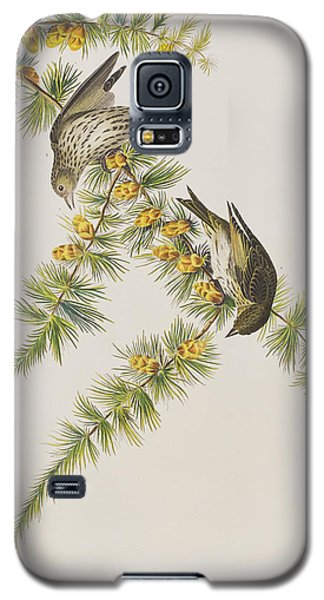 Pine Finch Galaxy S5 Case by John James Audubon