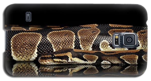 Ball Or Royal Python Snake On Isolated Black Background Galaxy S5 Case by Sergey Taran