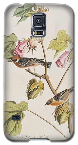 Bay Breasted Warbler Galaxy S5 Case by John James Audubon