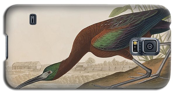 Glossy Ibis Galaxy S5 Case by John James Audubon