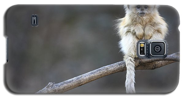 Golden Snub-nosed Monkey Rhinopithecus Galaxy S5 Case by Cyril Ruoso