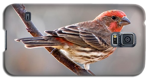 House Finch Galaxy S5 Case by Betty LaRue