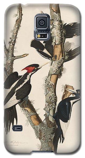 Ivory-billed Woodpecker Galaxy S5 Case by John James Audubon