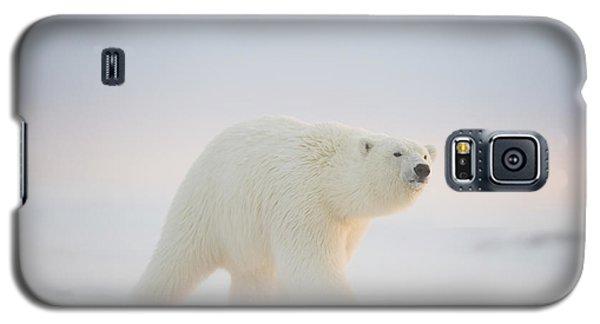 Polar Bear  Ursus Maritimus , Young Galaxy S5 Case by Steven Kazlowski