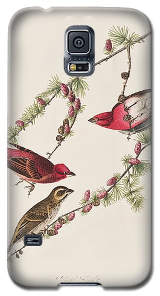 Purple Finch Galaxy S5 Case by John James Audubon