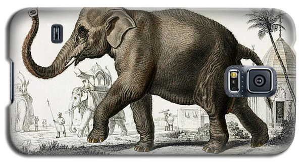 Indian Elephant, Endangered Species Galaxy S5 Case by Biodiversity Heritage Library