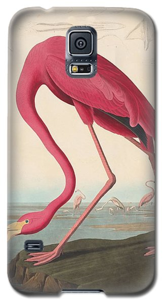 American Flamingo Galaxy S5 Case by John James Audubon