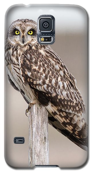 Short Eared Owl Galaxy S5 Case by Ian Hufton