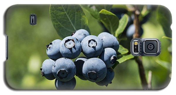 Blueberry Bush Galaxy S5 Case by John Greim