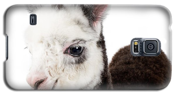 Adorable Baby Alpaca Cuteness Galaxy S5 Case by TC Morgan