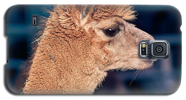 Alpaca Wants To Meet You Galaxy S5 Case by TC Morgan