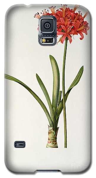 Amaryllis Curvifolia Galaxy S5 Case by Pierre Redoute
