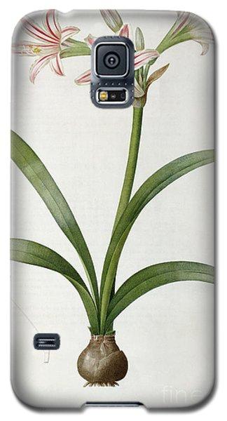 Amaryllis Vittata Galaxy S5 Case by Pierre Redoute
