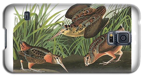 American Woodcock Galaxy S5 Case by John Audubon