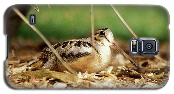 American Woodcock Galaxy S5 Case by John Burk