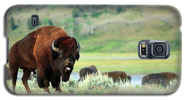Angry Buffalo Galaxy S5 Case by Todd Klassy