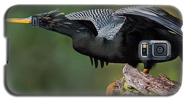 Anhinga Anhinga Anhinga, Costa Rica Galaxy S5 Case by Panoramic Images
