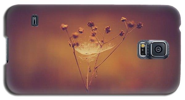 Autumn Web Galaxy S5 Case by Shane Holsclaw