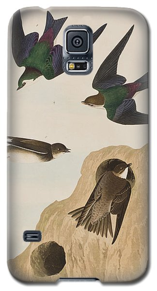 Bank Swallows Galaxy S5 Case by John James Audubon
