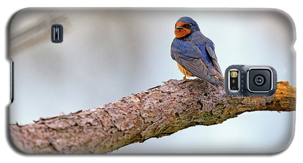 Barn Swallow On Assateague Island Galaxy S5 Case by Rick Berk