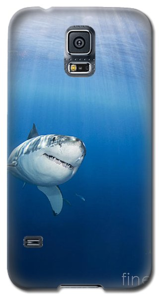 Beautiful Great White Galaxy S5 Case by Dave Fleetham - Printscapes