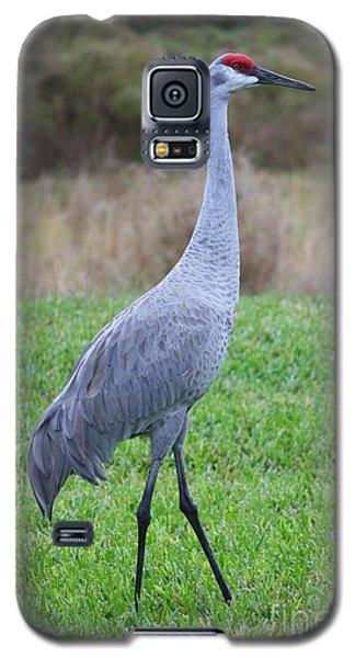 Beautiful Sandhill Crane Galaxy S5 Case by Carol Groenen