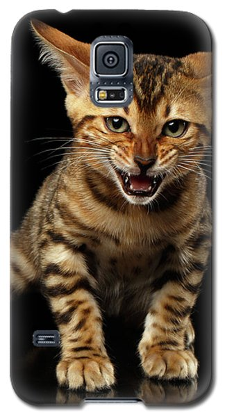 Bengal Kitty Stands And Hissing On Black Galaxy S5 Case by Sergey Taran