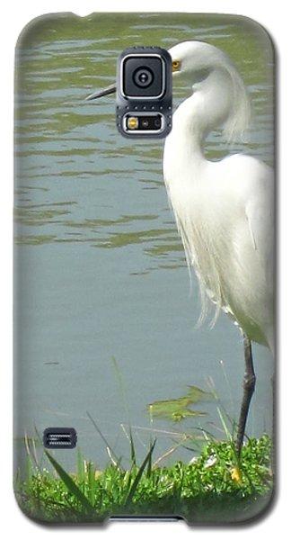Bird Galaxy S5 Case by Sandy Taylor